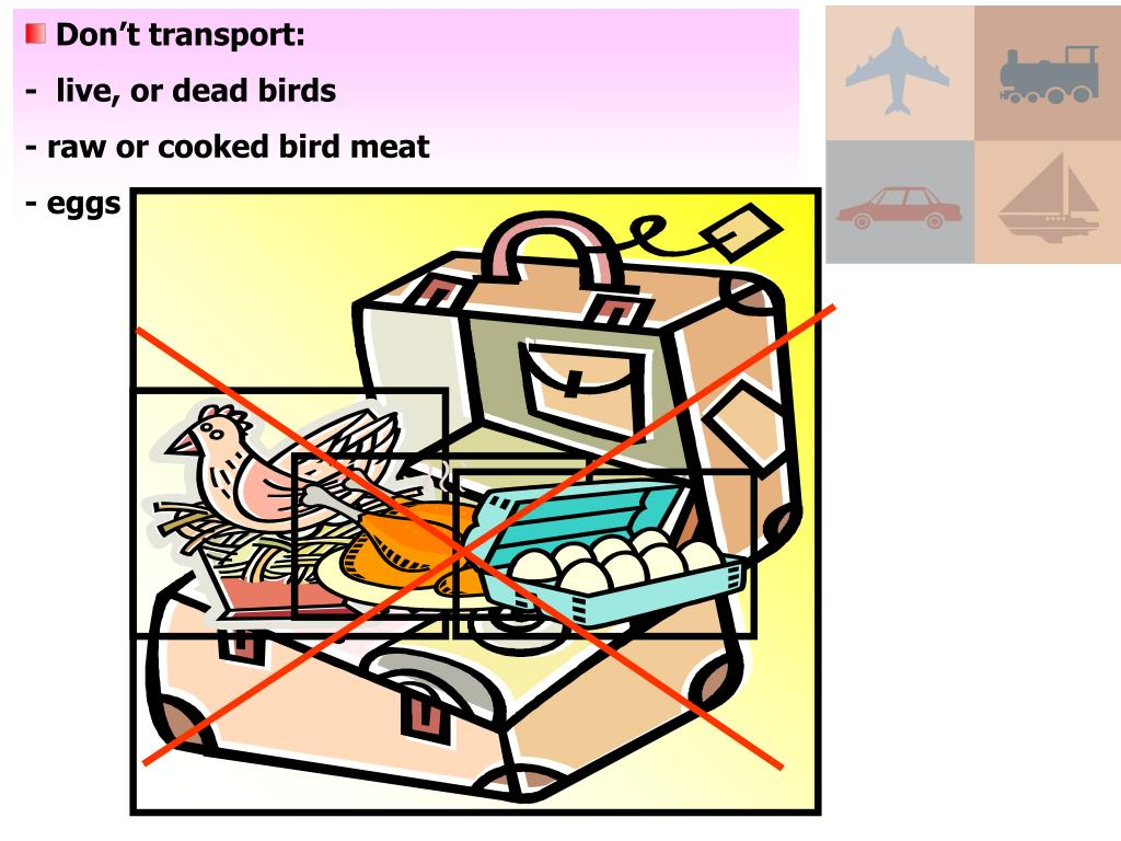 Don't transport: