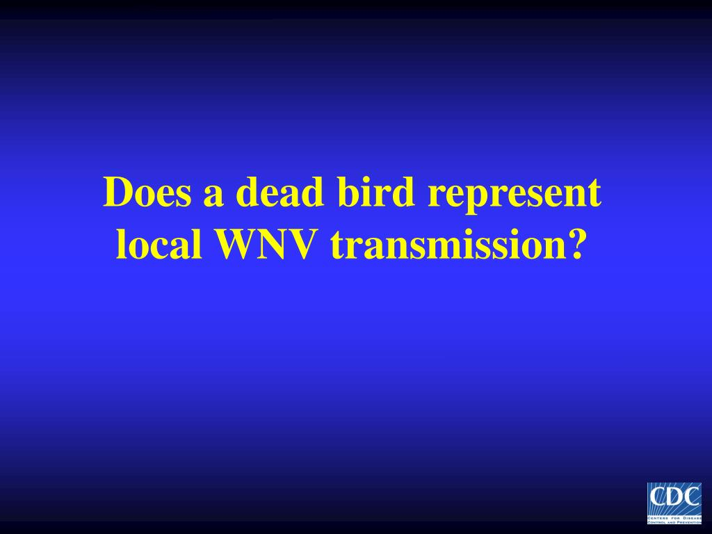 Does a dead bird represent local WNV transmission?