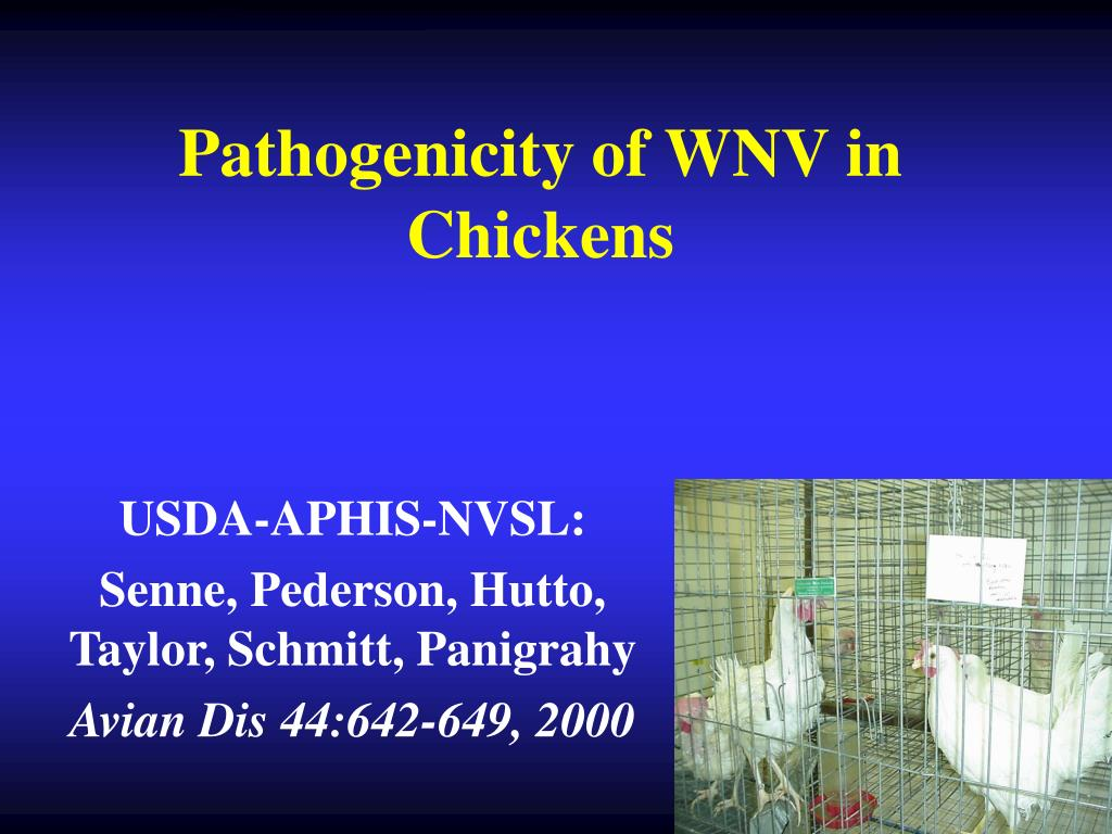 Pathogenicity of WNV in Chickens