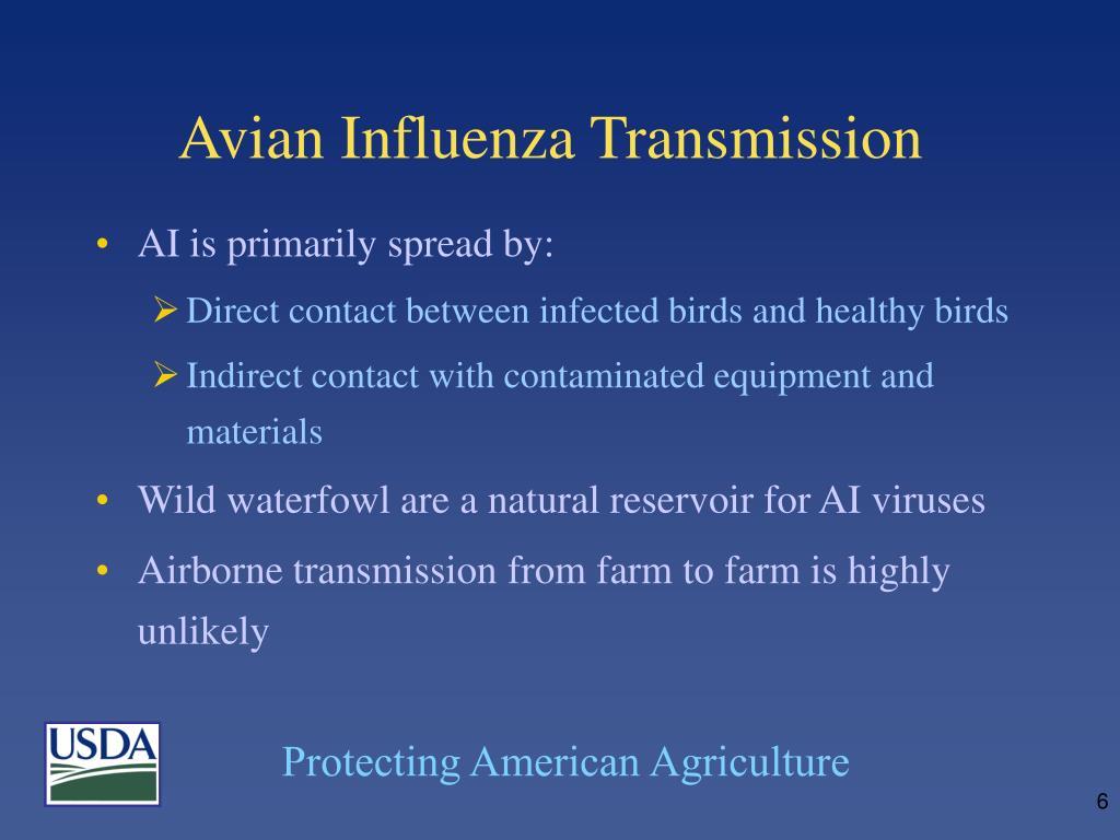 Avian Influenza Transmission