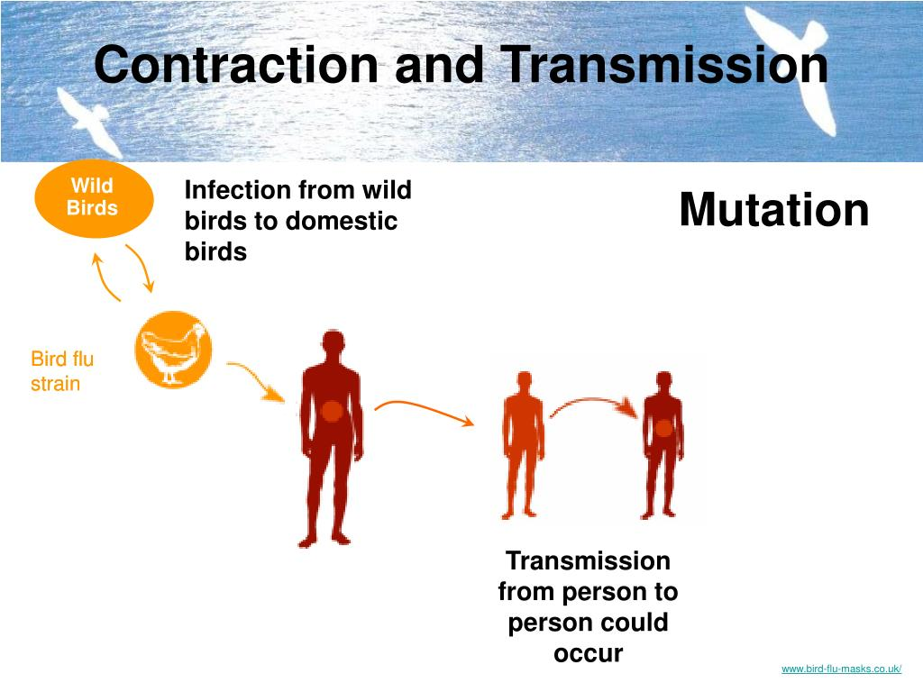 Contraction and Transmission