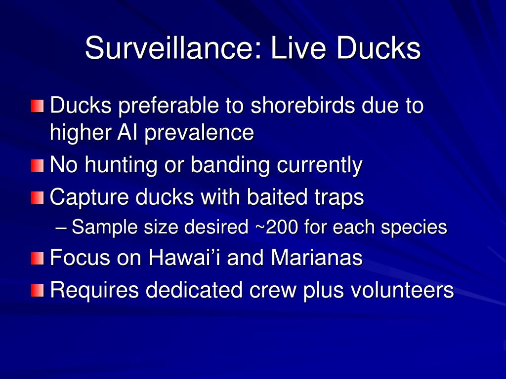 Surveillance: Live Ducks