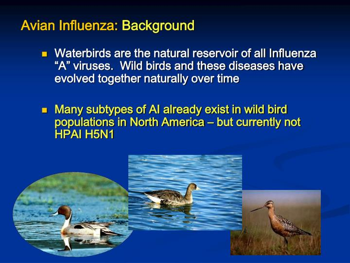Avian influenza background