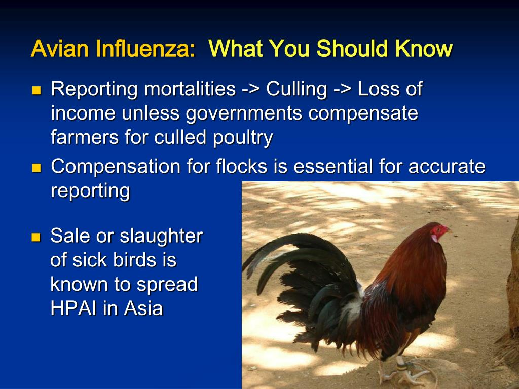 Reporting mortalities -> Culling -> Loss of income unless governments compensate farmers for culled poultry