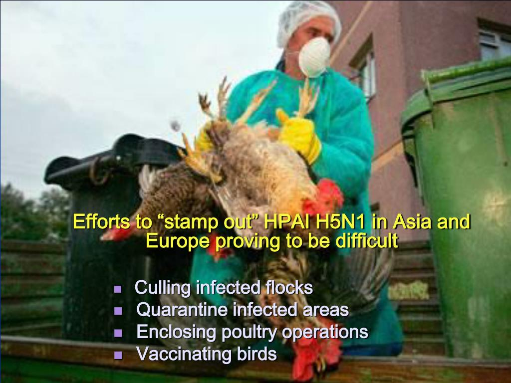 "Efforts to ""stamp out"" HPAI H5N1 in Asia and Europe proving to be difficult"