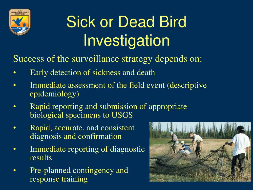 Sick or Dead Bird Investigation