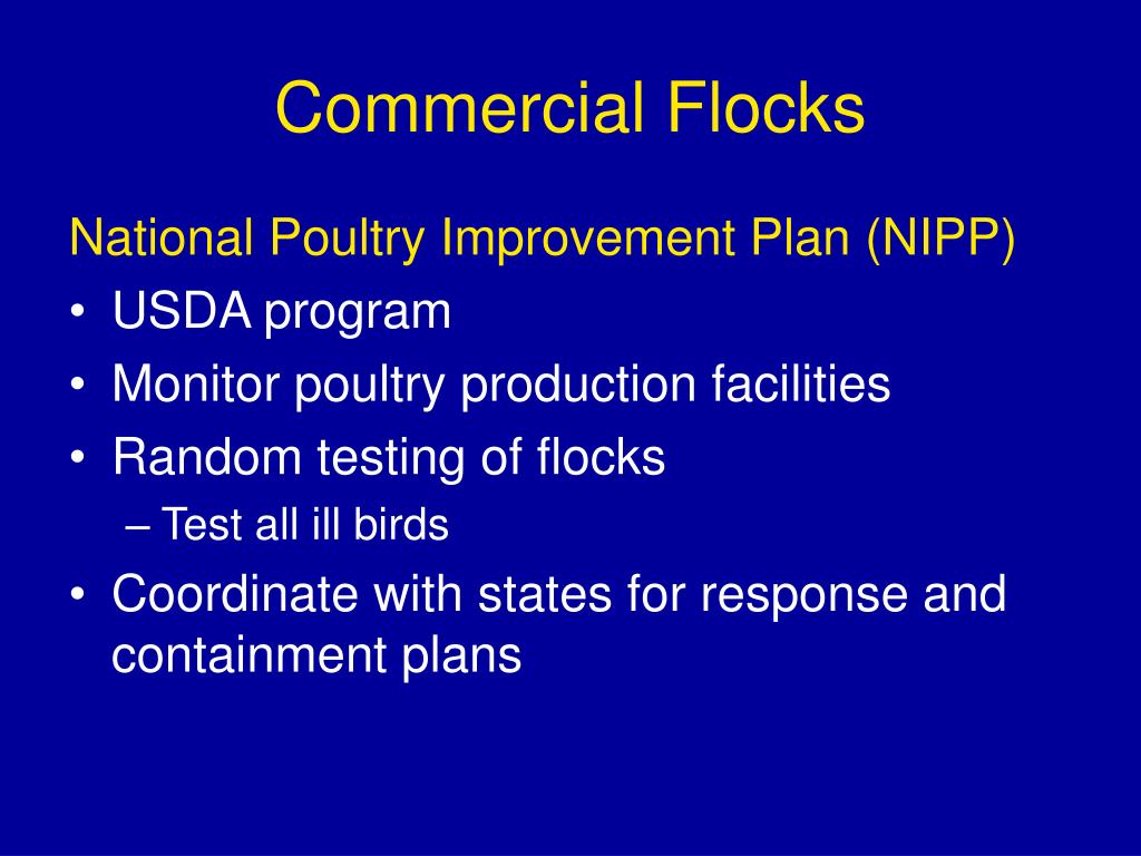 Commercial Flocks