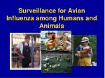 surveillance for avian influenza among humans and animals