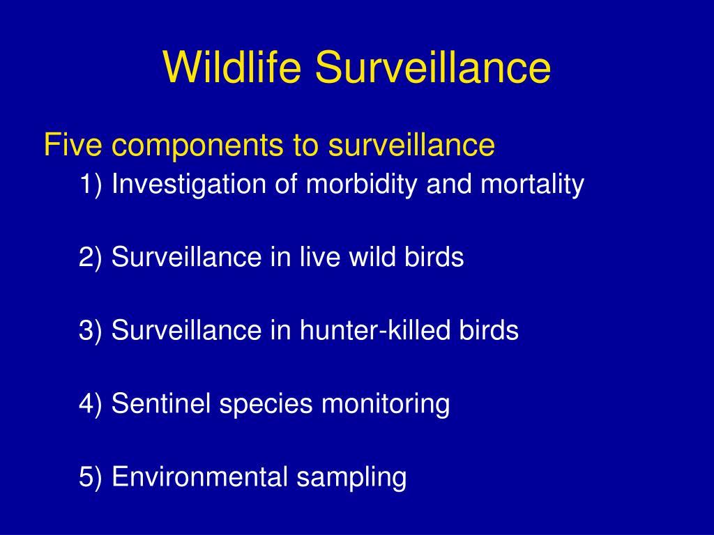 Wildlife Surveillance
