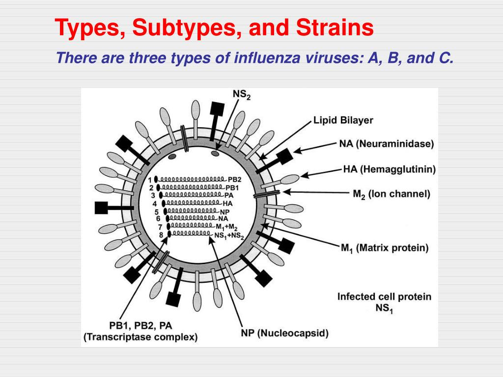 Types, Subtypes, and Strains