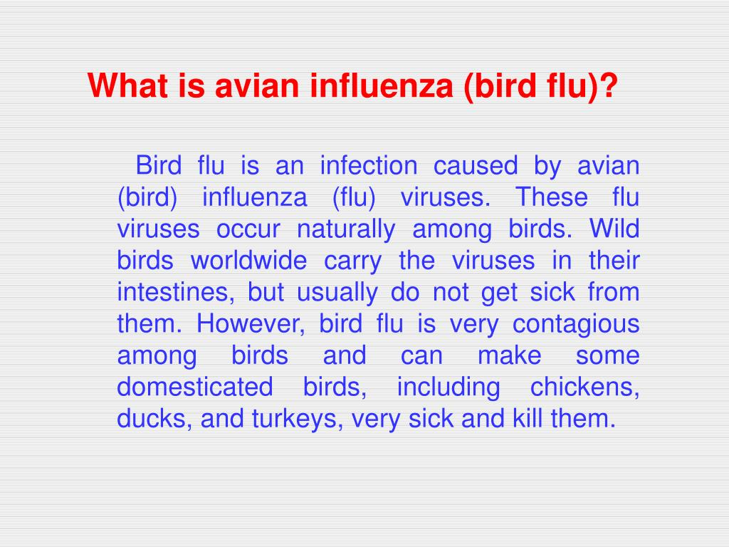 What is avian influenza (bird flu)?