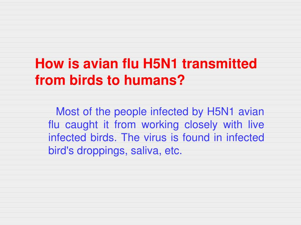 How is avian flu H5N1 transmitted from birds to humans?