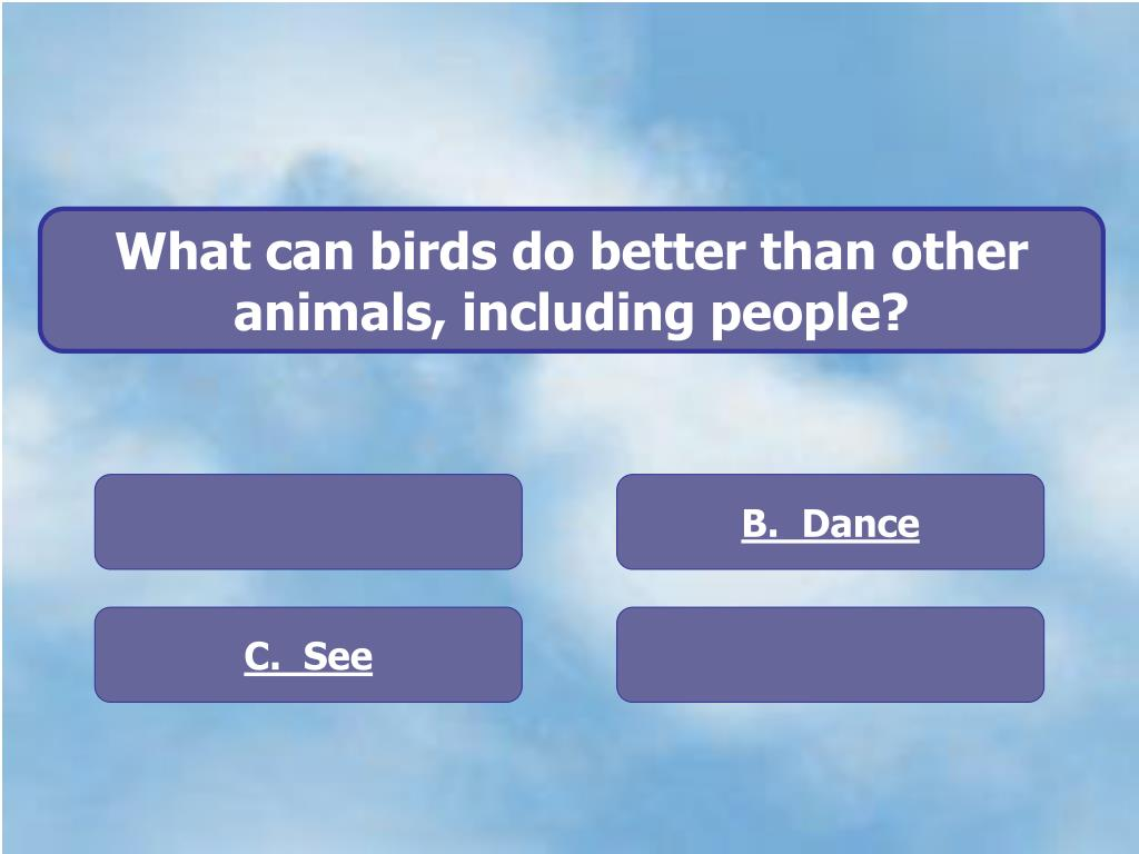 What can birds do better than other animals, including people?