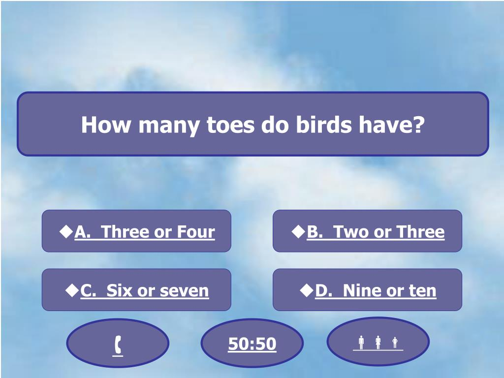 How many toes do birds have?