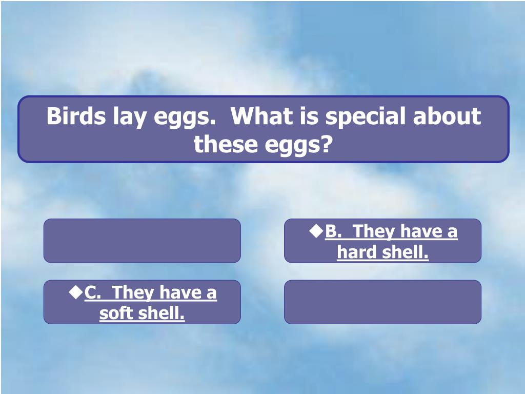 Birds lay eggs.  What is special about these eggs?