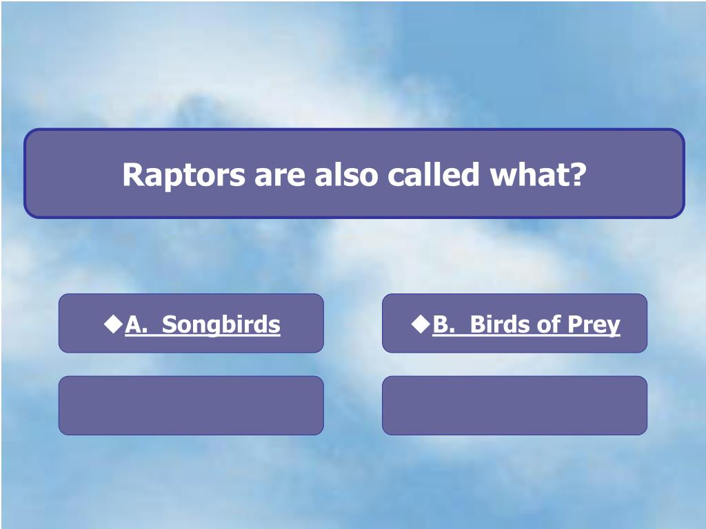Raptors are also called what?