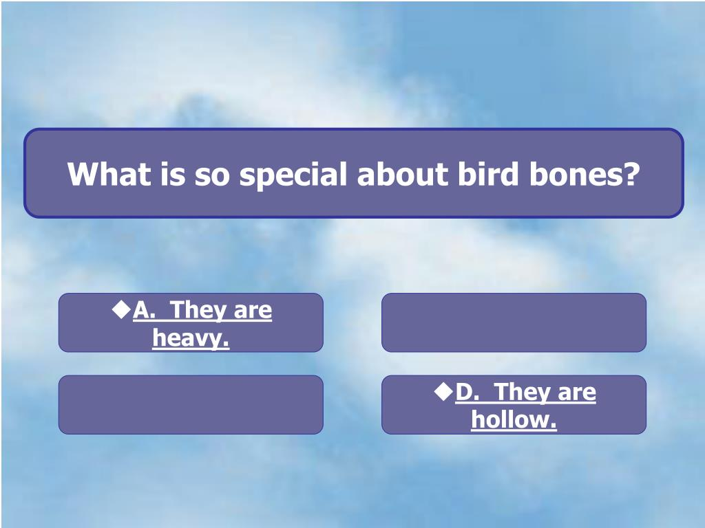 What is so special about bird bones?