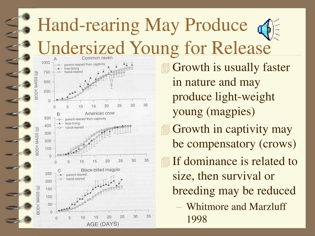 Hand-rearing May Produce Undersized Young for Release