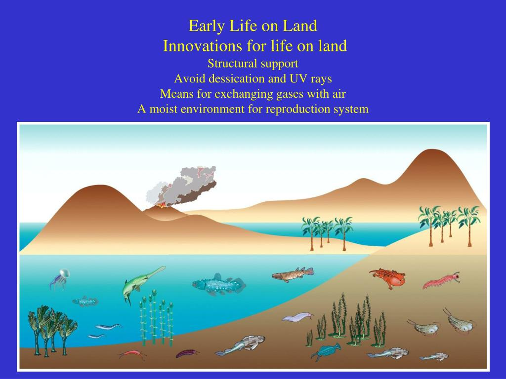 Early Life on Land