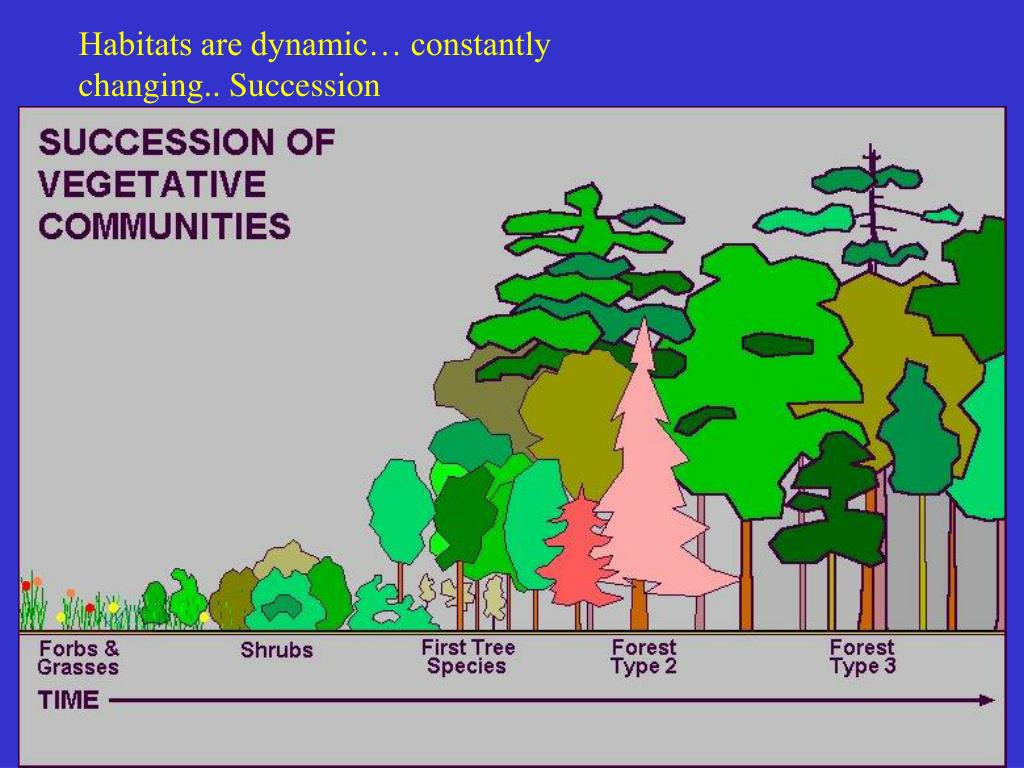 Habitats are dynamic… constantly changing.. Succession