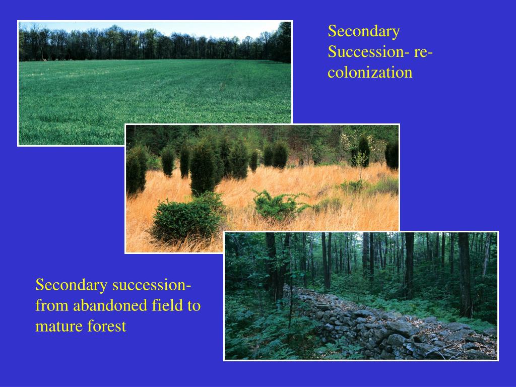 Secondary Succession- re-colonization