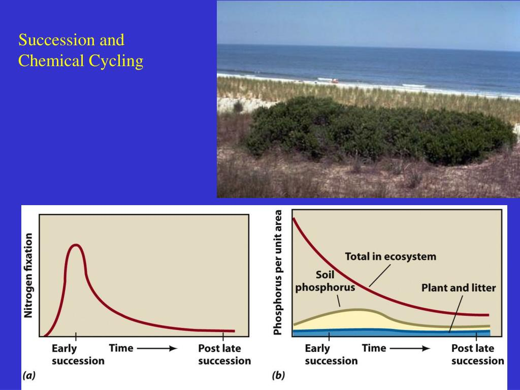 Succession and Chemical Cycling