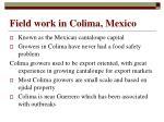 field work in colima mexico
