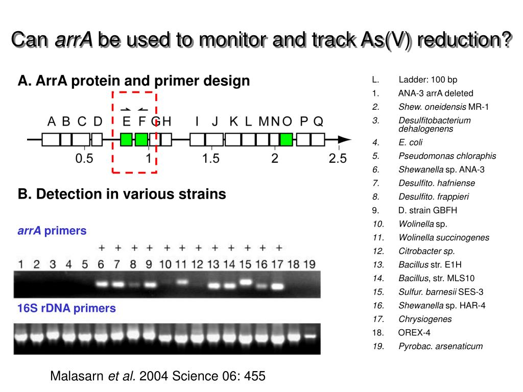 A. ArrA protein and primer design