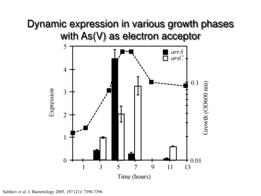 Dynamic expression in various growth phases with As(V) as electron acceptor