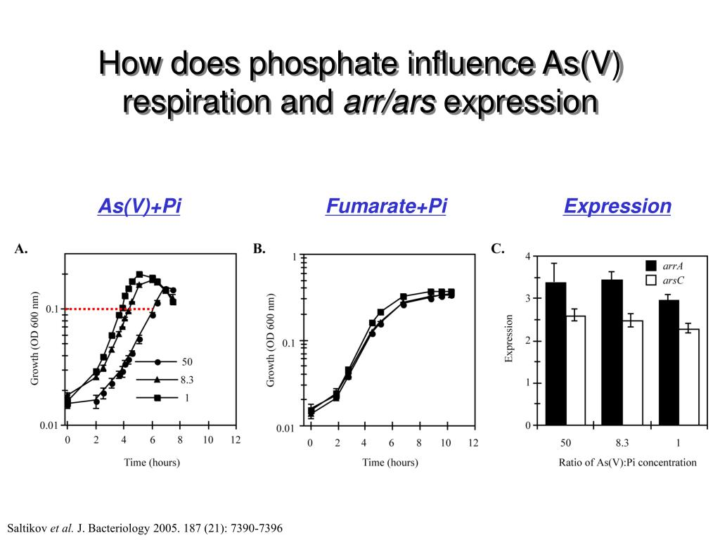 How does phosphate influence As(V) respiration and