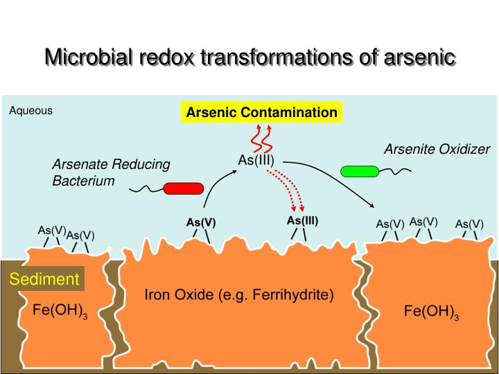 Microbial redox transformations of arsenic