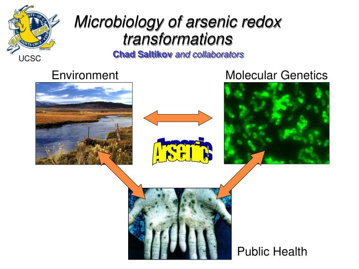 Microbiology of arsenic redox transformations l.jpg