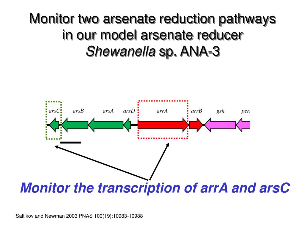 Monitor two arsenate reduction pathways