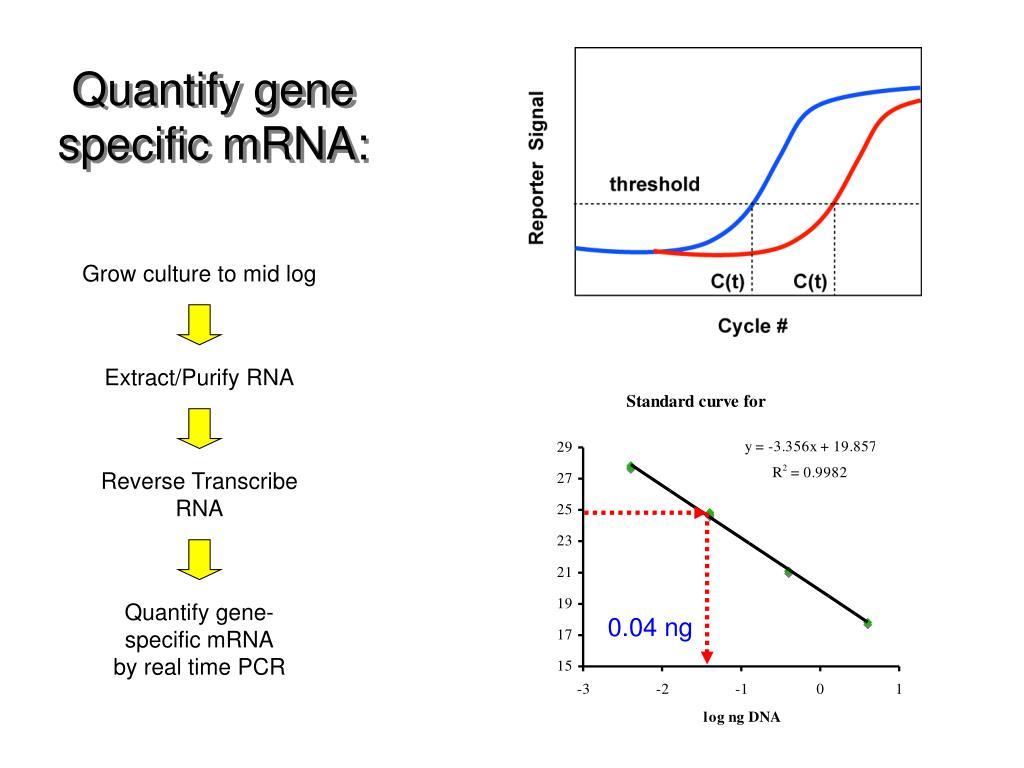 Quantify gene specific mRNA: