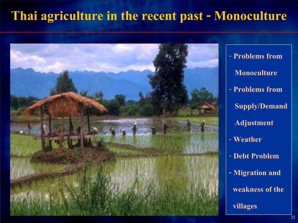 Thai agriculture in the recent past - Monoculture