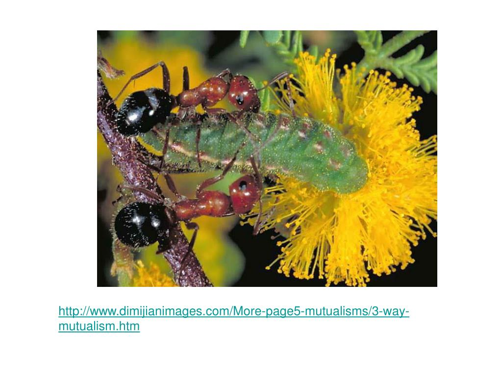 http://www.dimijianimages.com/More-page5-mutualisms/3-way-mutualism.htm