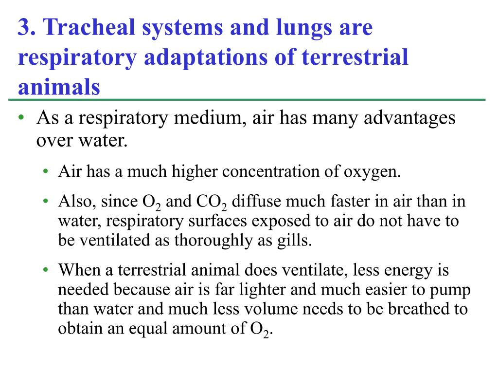 As a respiratory medium, air has many advantages over water.