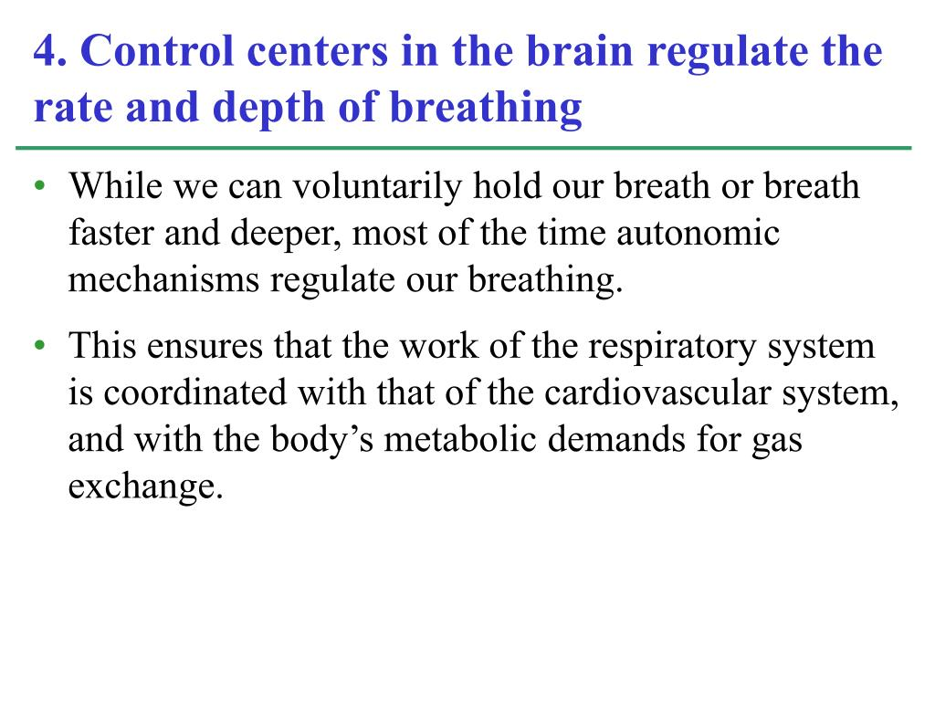 While we can voluntarily hold our breath or breath faster and deeper, most of the time autonomic mechanisms regulate our breathing.