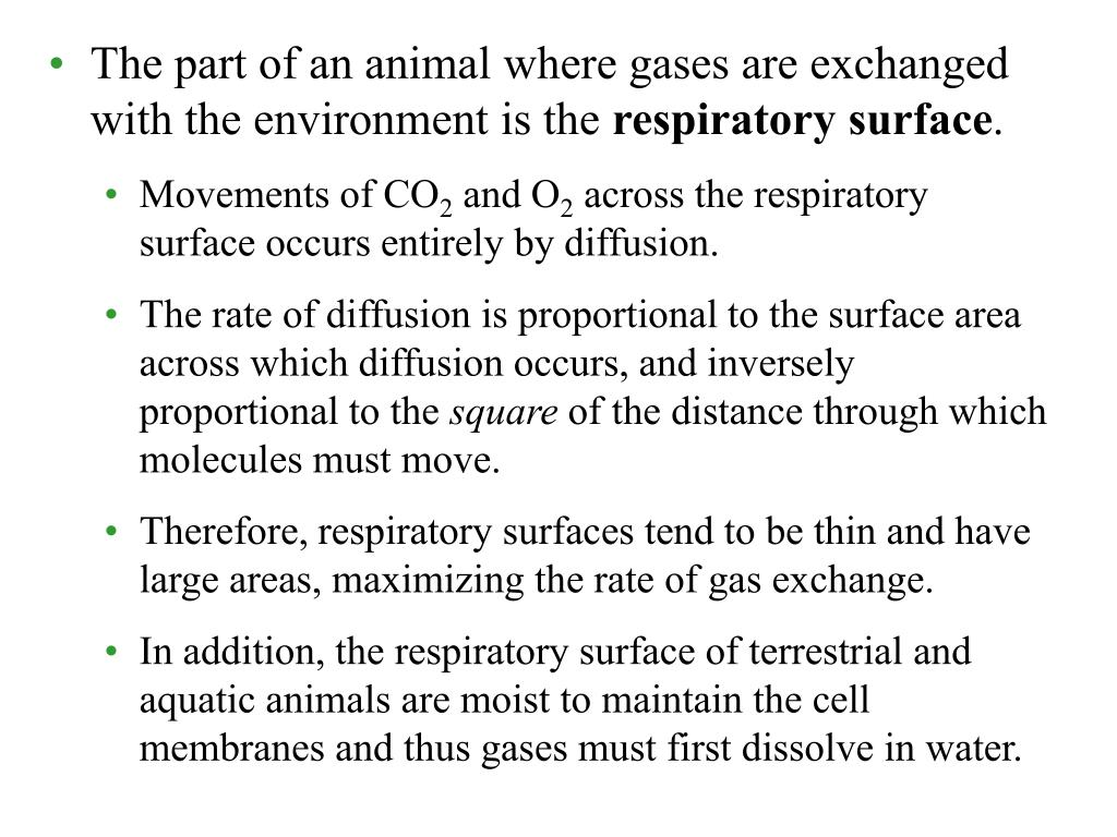 The part of an animal where gases are exchanged with the environment is the