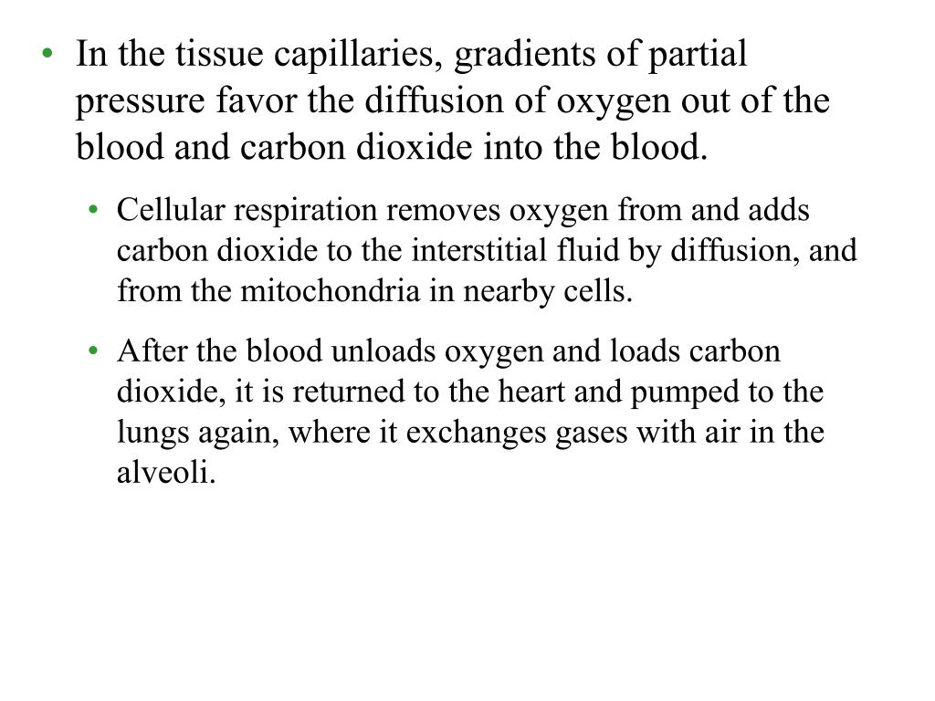 In the tissue capillaries, gradients of partial pressure favor the diffusion of oxygen out of the blood and carbon dioxide into the blood.