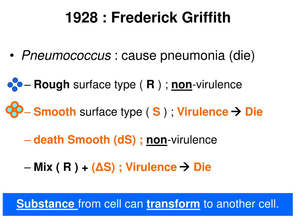 1928 : Frederick Griffith