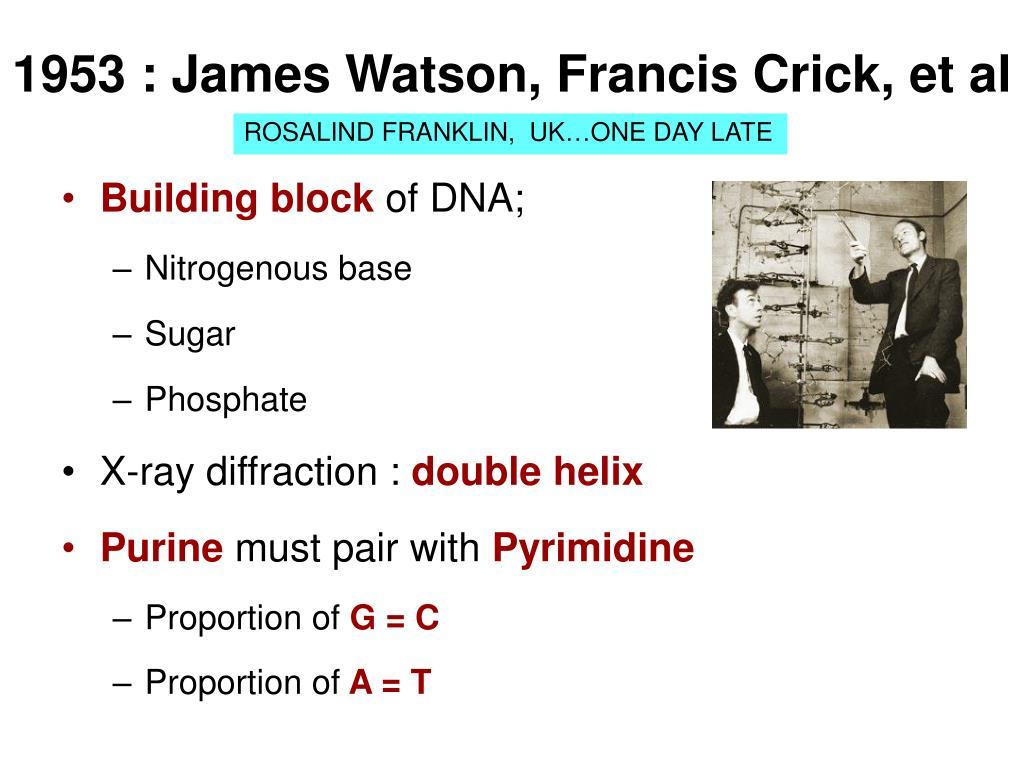 1953 : James Watson, Francis Crick, et al