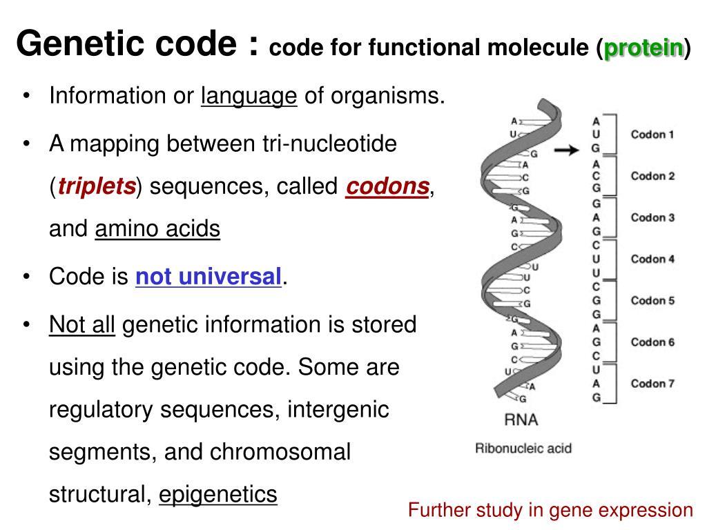 Genetic code :