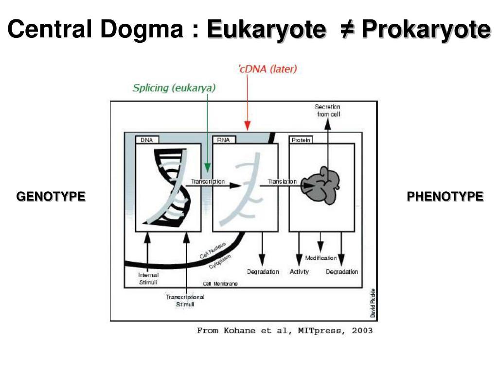 Central Dogma :