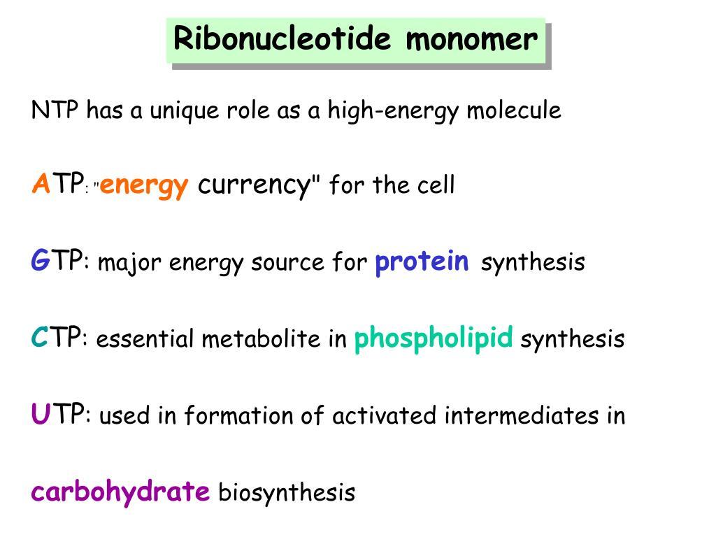 Ribonucleotide monomer