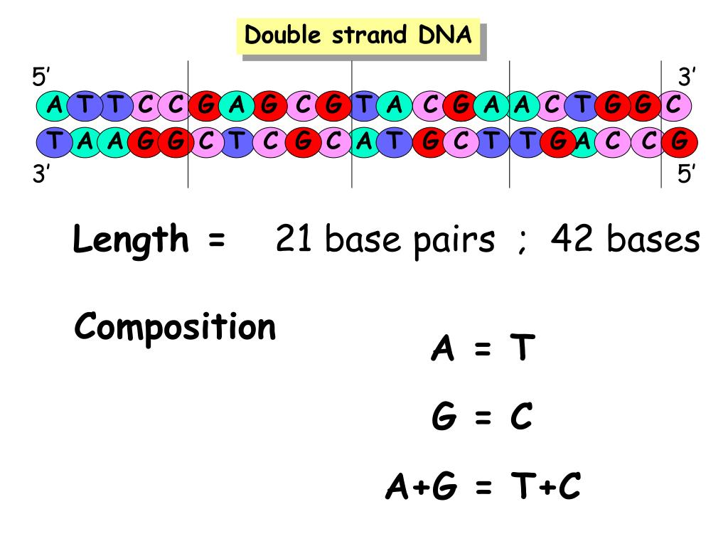 Double strand DNA