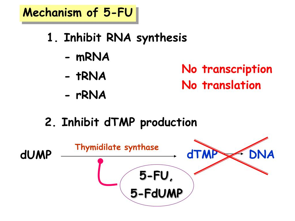 2. Inhibit dTMP production