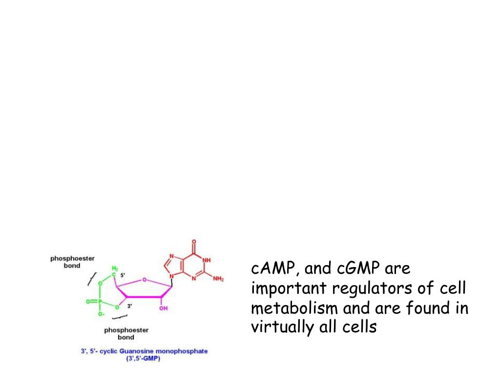 cAMP, and cGMP are important regulators of cell metabolism and are found in virtually all cells