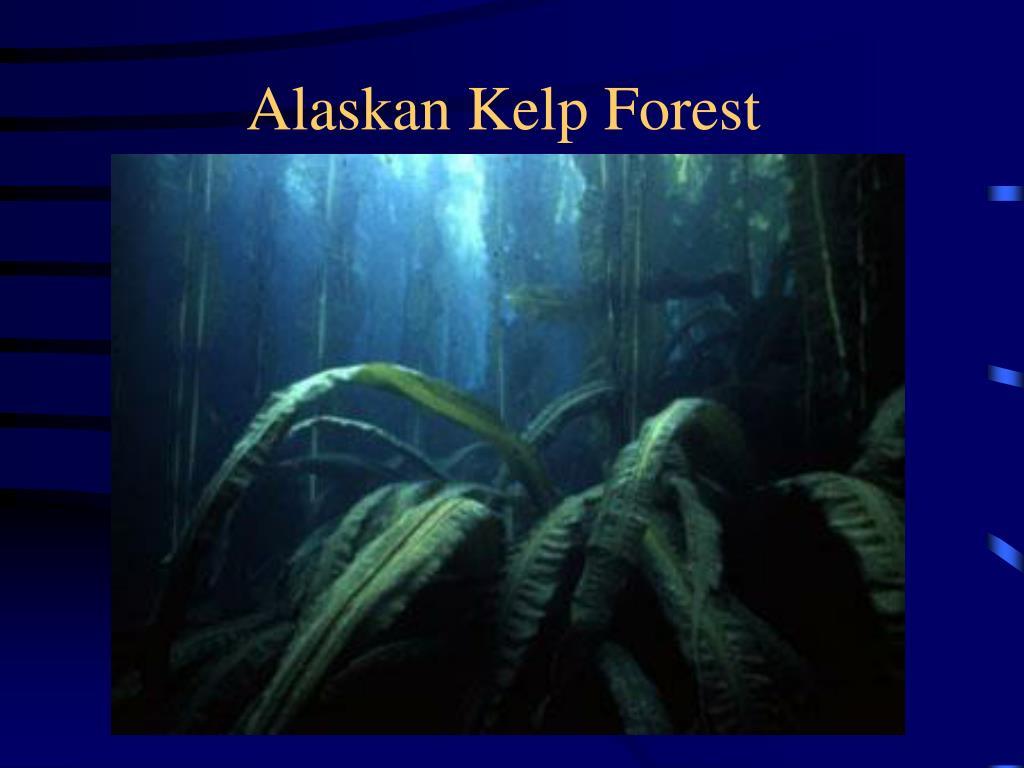 Alaskan Kelp Forest