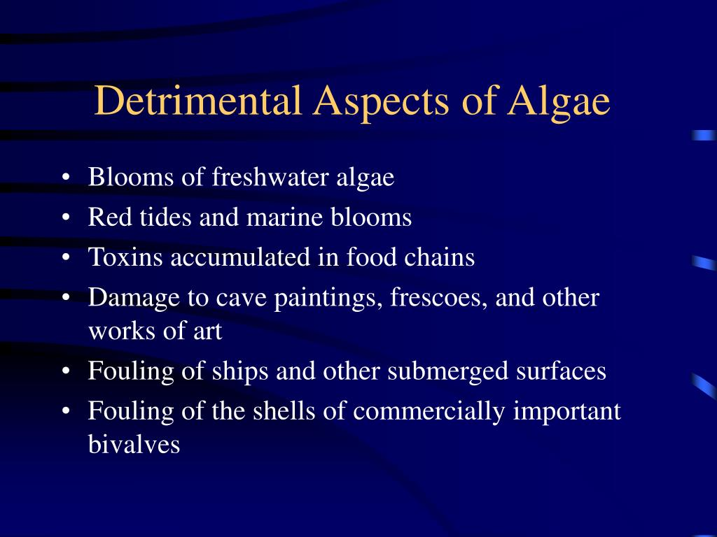 Detrimental Aspects of Algae